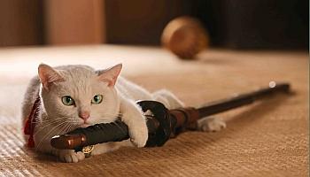 癒しの白猫・玉之丞。劇場版「猫侍」発売