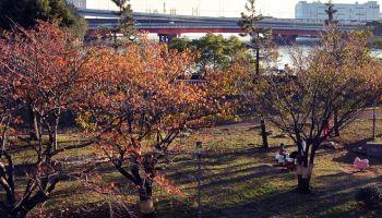 枯葉の季節に色とりどりの「茶色い音楽」はいかが?