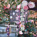 五色の散り椿/桜~舞妓の恋~