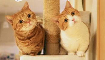 犬・猫・小動物など癒しのかわいい動物写真集まとめ